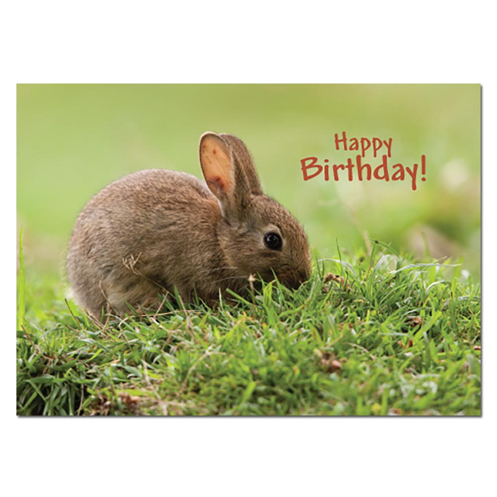 Greeting cards childrens birthday nature homesew greeting cards childrens birthday nature kristyandbryce Images