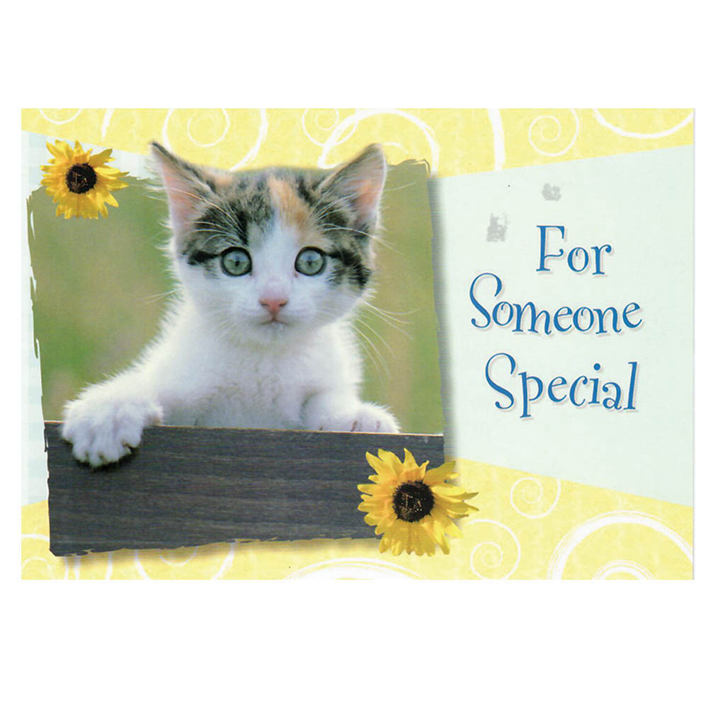 Curious Kittens Friendship Greeting Cards 12pk Homesew