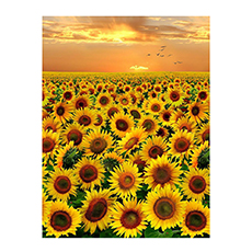 Sunflower Fabric Collection-Gold Sunset