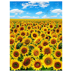 Sunflower Fabric Collection- Blue Sky